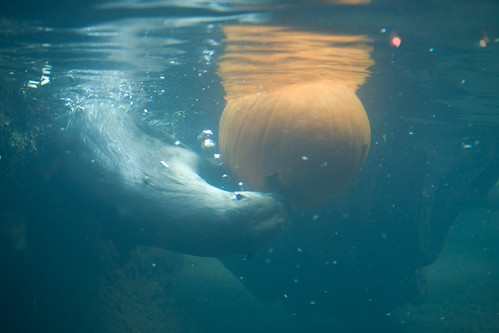 River Otter and Pumpkin