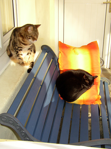 cats-in-the-conservatory2