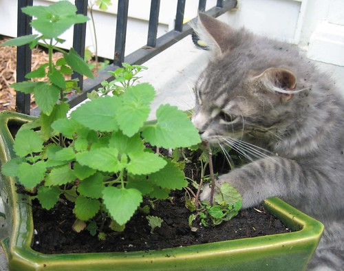 Image result for cats gardening