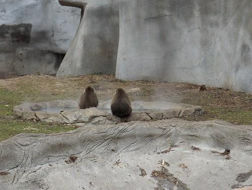 Det Zoo 123007_0122