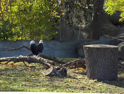 Det Zoo Vol 111807 001
