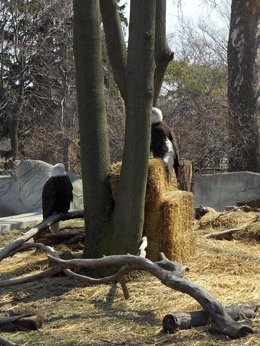 Det Zoo 41108_0007