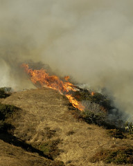 Verdugo Foothill Blaze Chars 25 Acres