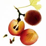 grapeseed.jpg