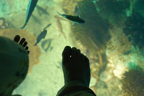 熱帯魚水槽の上を歩く