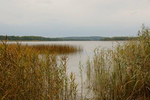 Žaslių ežeras