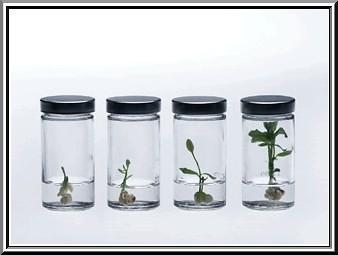 etapas de germinación de una planta en una probeta