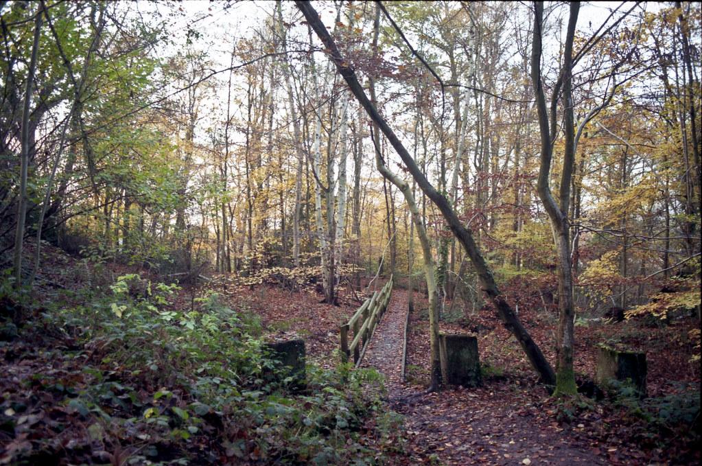 C S Lewis Nature Reserve - 3