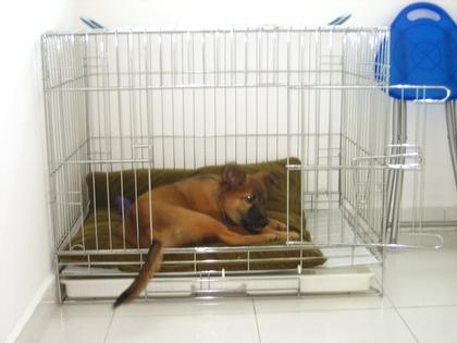 Koda's new home
