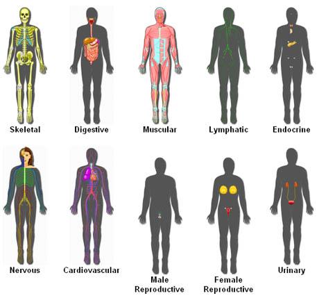 Anatom�a online