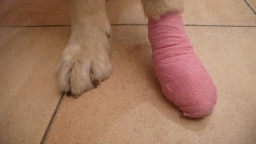 Foot and bangaded foot.