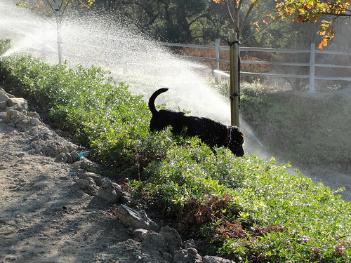 He's in heaven when he finds sprinklers