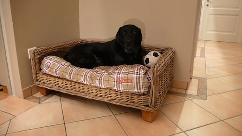 Eiko on the new doggybag