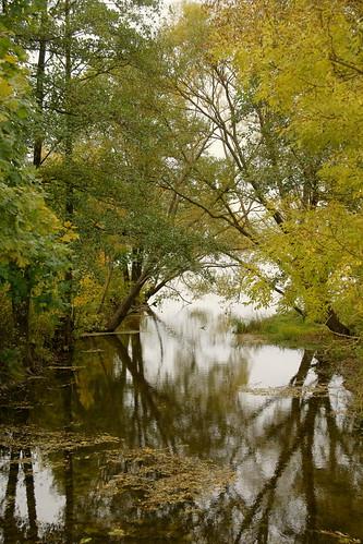 Žaslos upelis