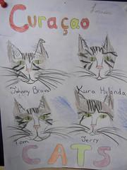 Kura Holanda Cats