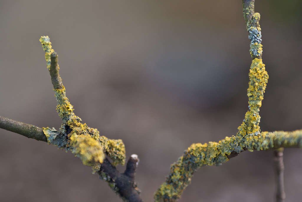 Lichen stumps macro