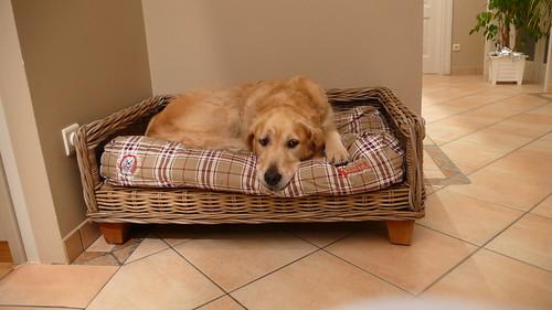 Valéas on the new doggybag