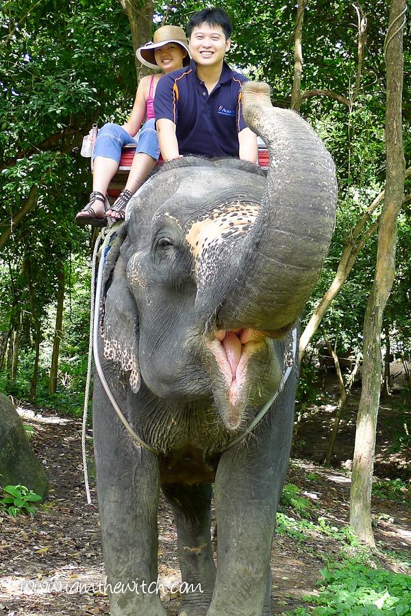 Elephant-17