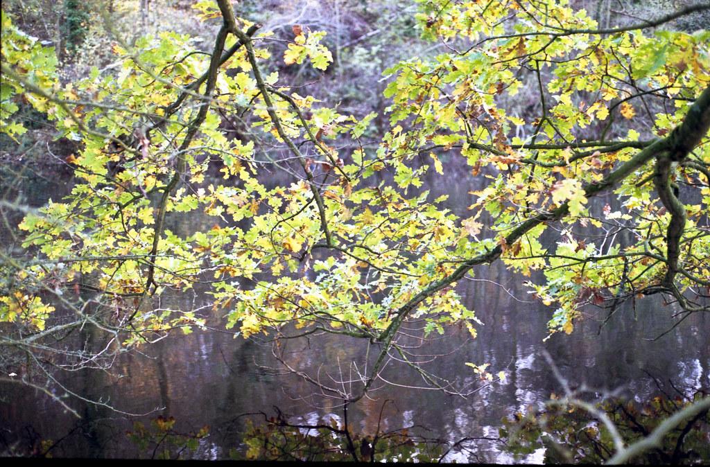 C S Lewis Nature Reserve - 5