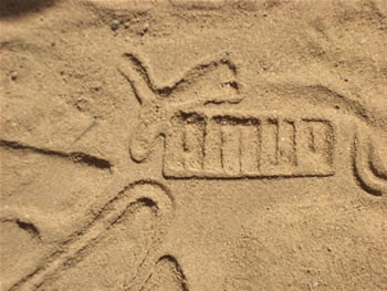 puma traces in the sand