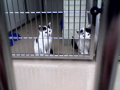 Kittens at Nottingham Cats Protection League
