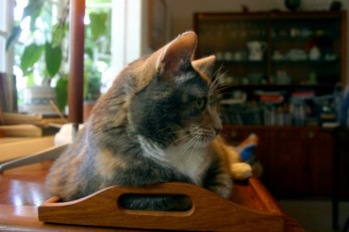 Inbox Cat