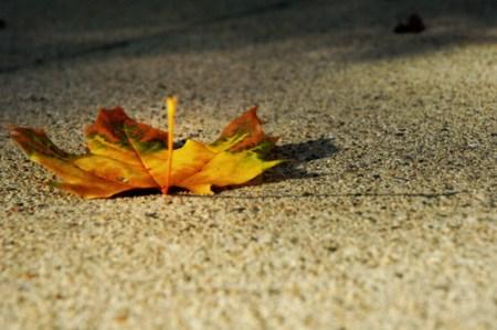 tie dye leaf 2