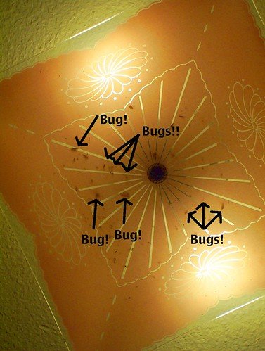bugs in light fixture