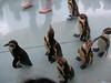 鳥羽水族館のペンギンパレード