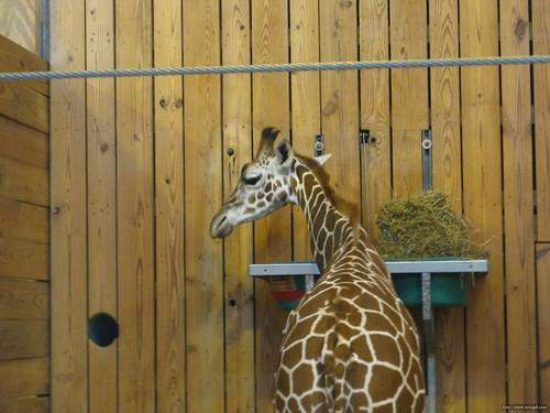 Det Zoo 112908_0049