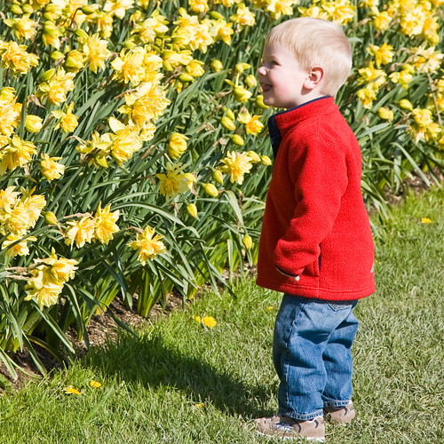 Alex stares at daffodils