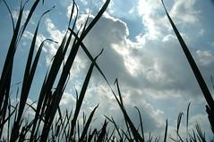 tall grass