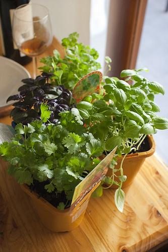 Baby Herbs