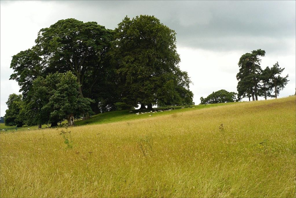 Calke Abbey landscape | 1/160 s | f/9 | ISO 100 | 50 mm prime