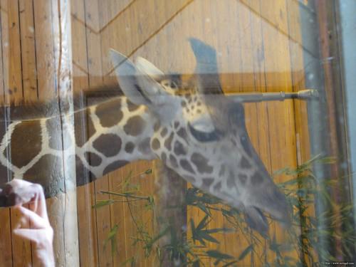 Det Zoo 112908_0041
