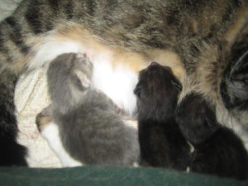 Kittens_20080311_003