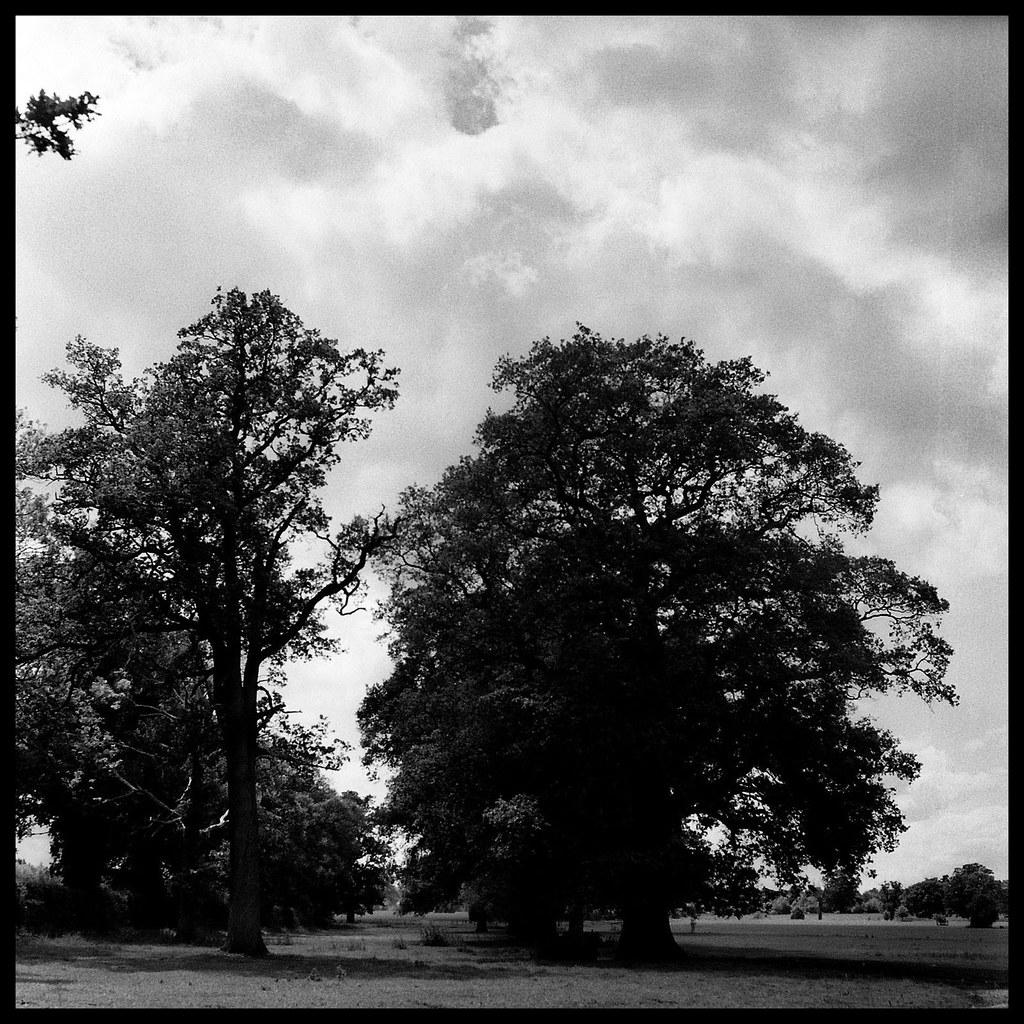 Trees near Swallowfield