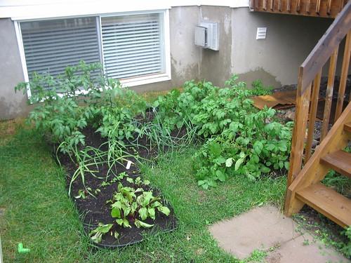 Garden 29 Jun 08