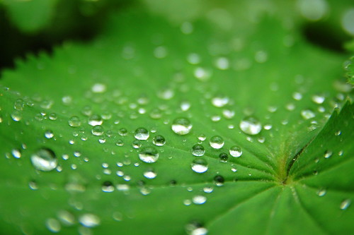 Water Pearls on Green