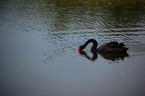 Botanic garden lake...