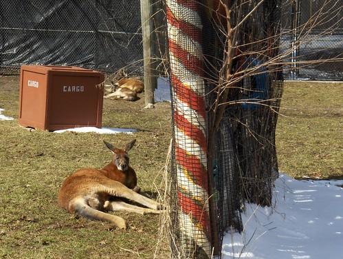 Det Zoo 032908_0006