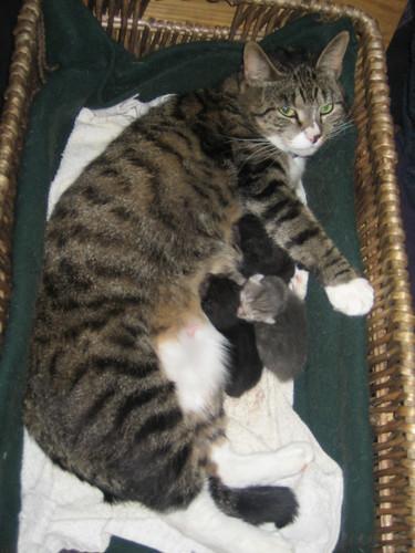 Kittens_20080311_017