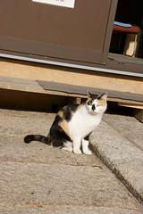 大谷本廟のネコ