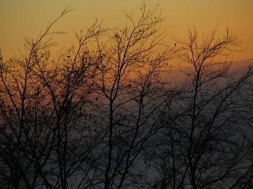 Sunset to Night - 11