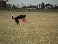 Jess catching frisbee