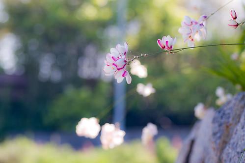 散歩道の花、なんの花?