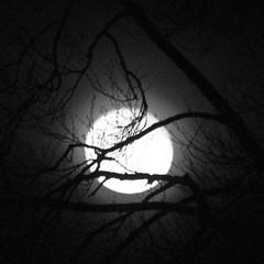 41/365 Full moon