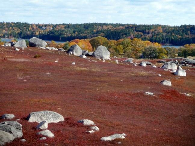 Wild blueberries barren in Blue Hill, Maine