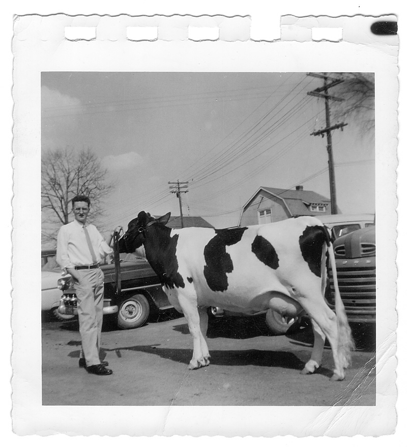 My Dad, with cow