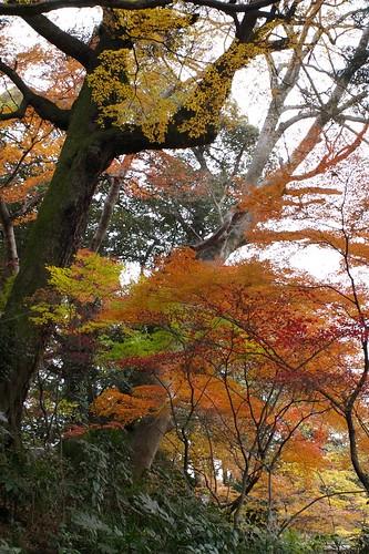 Natural Color Gradation